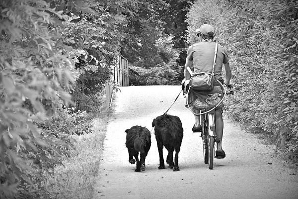 CaniVTT : avalez les kilomètres avec votre compagnon !